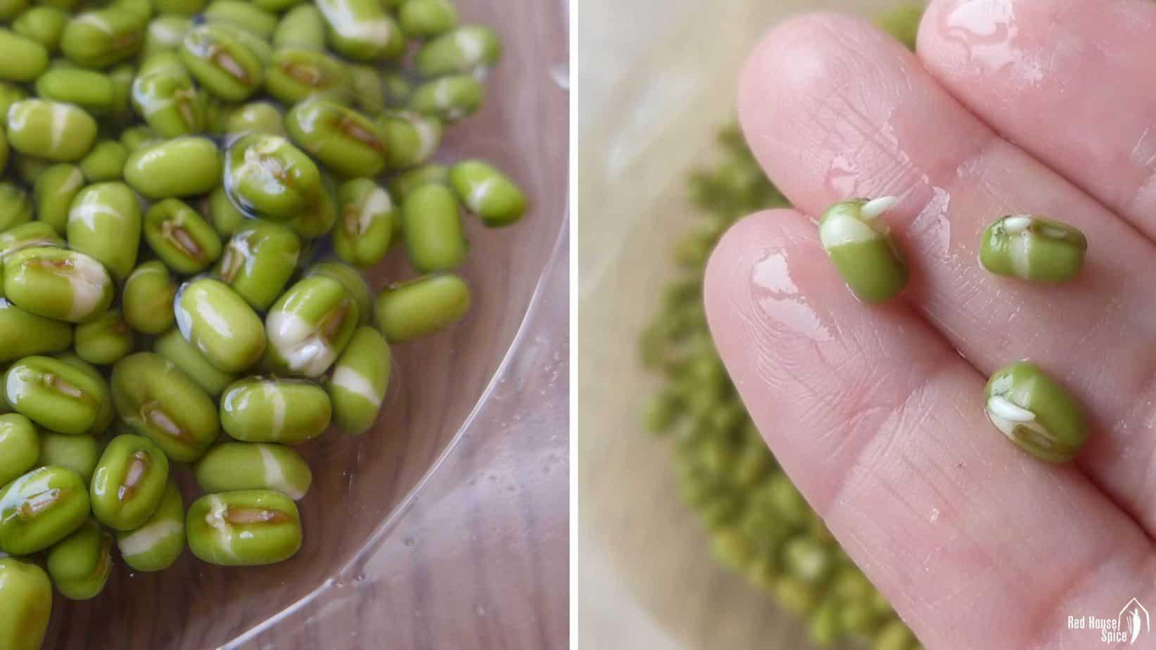 soaked mung beans