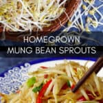 Homegrown mung bean sprouts and a stir-fry dish