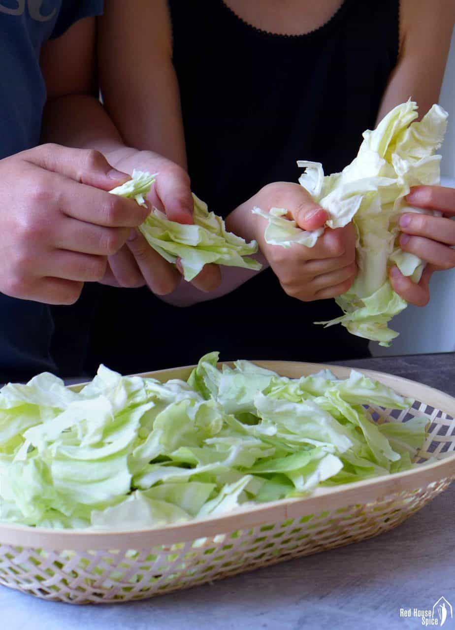 Two pairs of hands tearing cabbage leaves